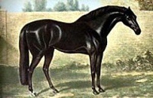 The Godolphin Arabian - One of the three foundation horses of the throughbred
