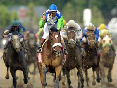 Barbaro - famous race horse